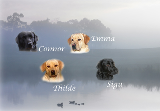 ducksonlakefade+dogs